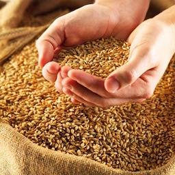 Доска объявлений куплю зерно размещение бесплатных объявлений в донецкой области