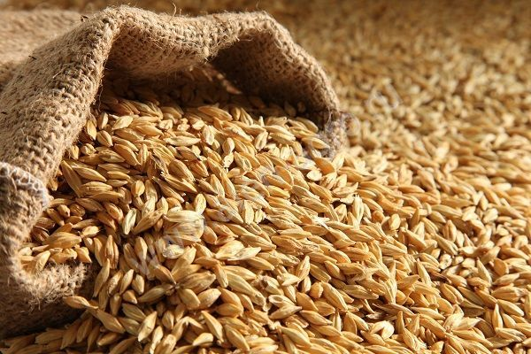 В Китай отправилась первая партия зерна из Амурской области