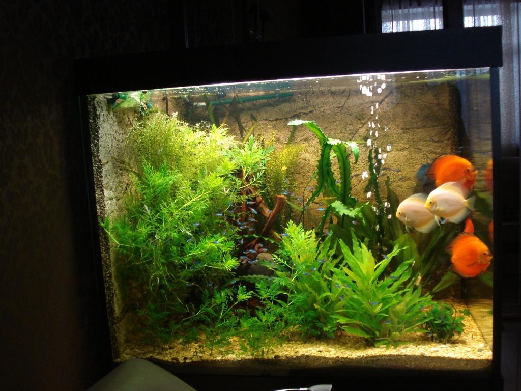 онлайн аквариумы и рыбки в спб причины